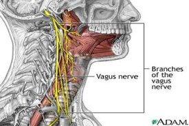 rsz_vagus-nerve